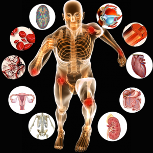 Anatomy-of-Human-Body-and-Physiology